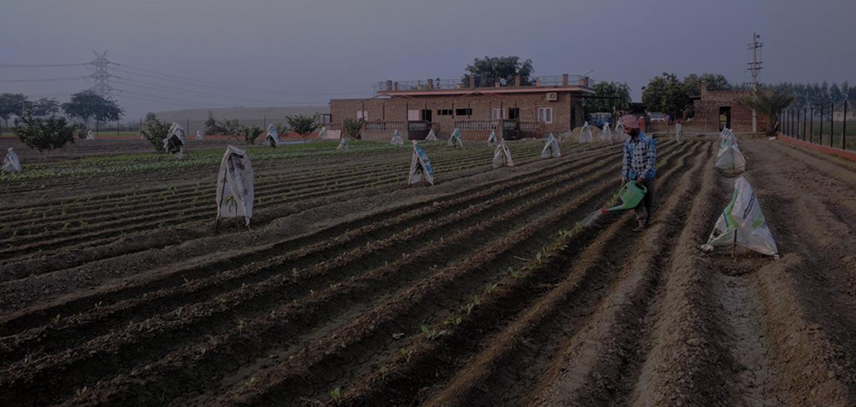 Hunsali Organic Farm & Farm Stay